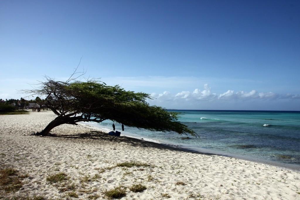 Leef! Aruba